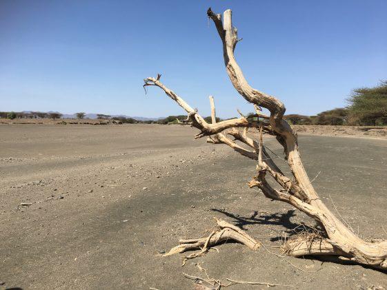 Dürre und Hungersnot machen den Menschen zu schaffen